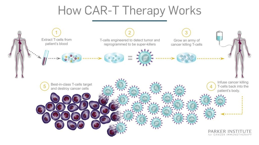 Car T Cell Therapy The Car Database