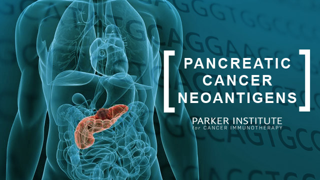 Pancreatic Cancer Neoantigens Final