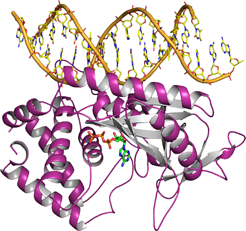 CGAS DNA Bound Image 2