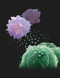Exosomes can suppress T-cells
